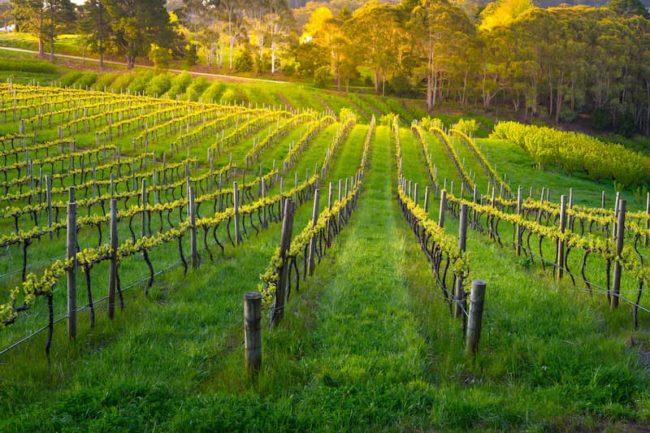 vignes le bourguignon ecommerce